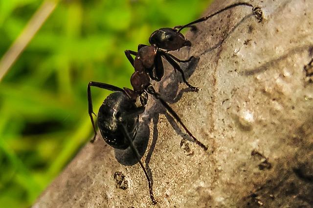 mravenec na stromě