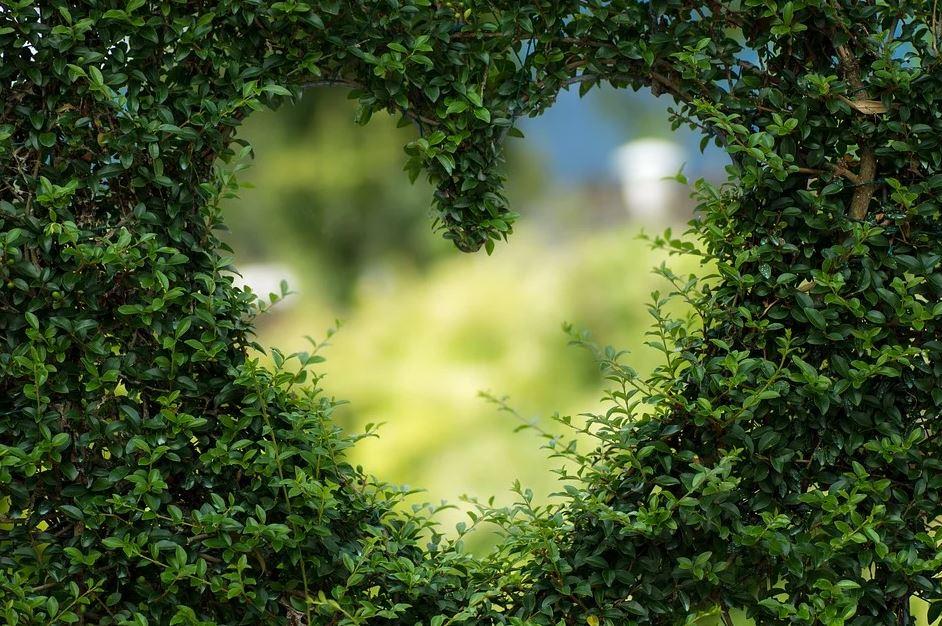 srdce v živém plotě